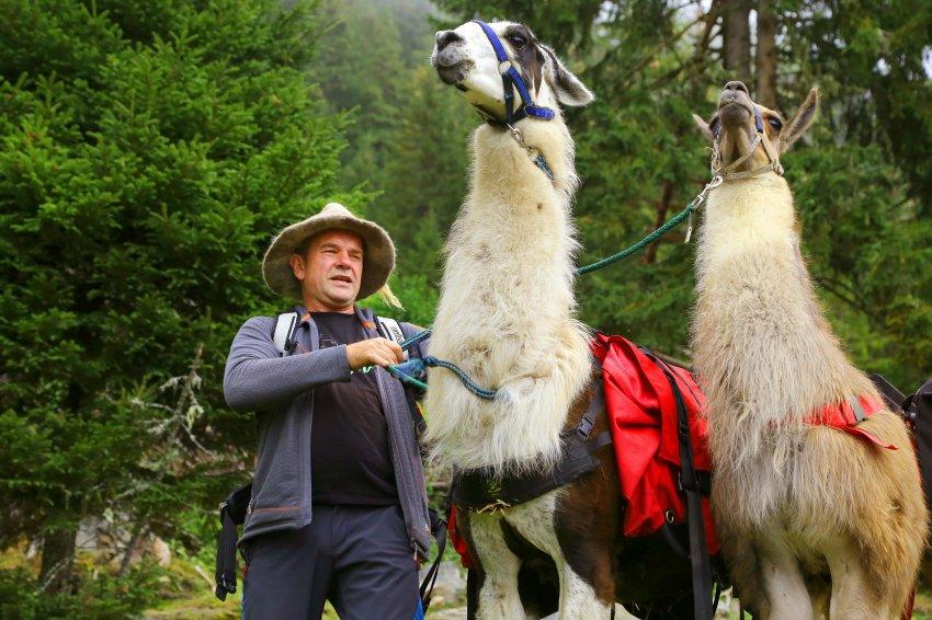 Entschleunigung mit Lamas